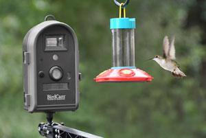 BirdCam hummingbird