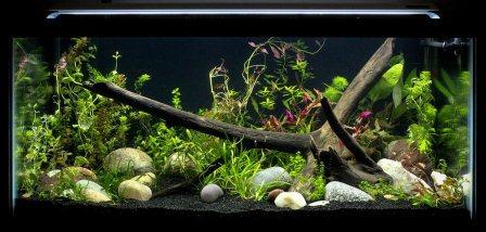 Amazon Com Finnex Fugeray Aquarium Led Light Plus