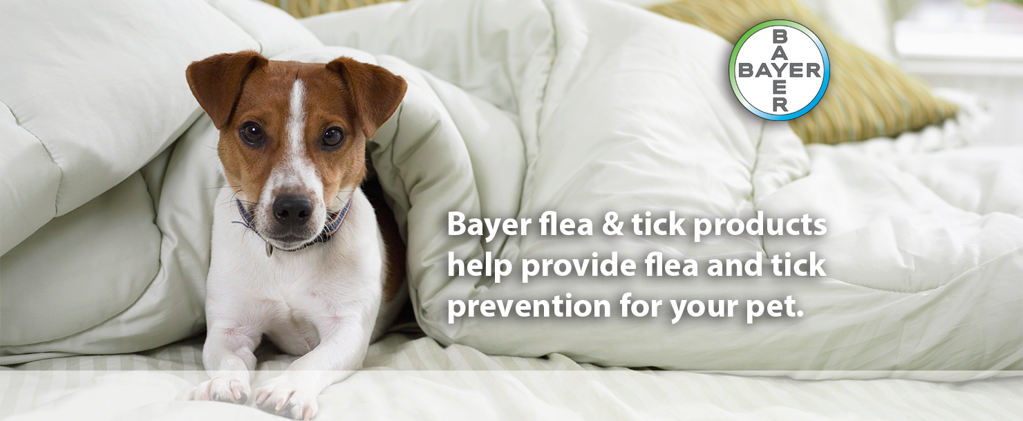 bayer flea and tick products help provide flea and tick prevention for your pet