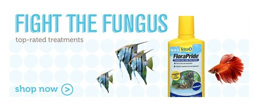Fungus & Bacteria Treatments