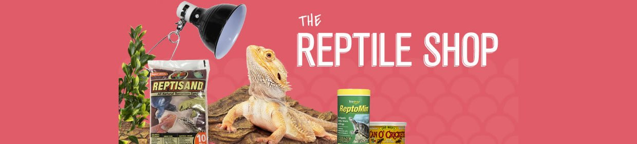 Reptile Shop New Visitor