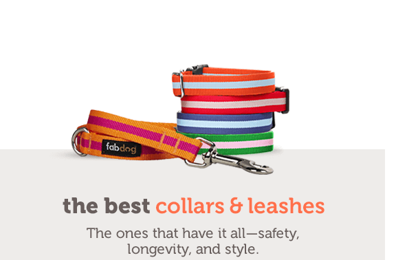 the best Collars & Leashes The ones that have it all—safety, longevity, and style