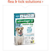 flea & tick solutions