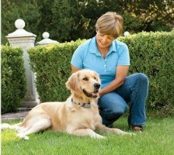 Amazon Com Petsafe Gentle Spray Bark Collar For Dogs