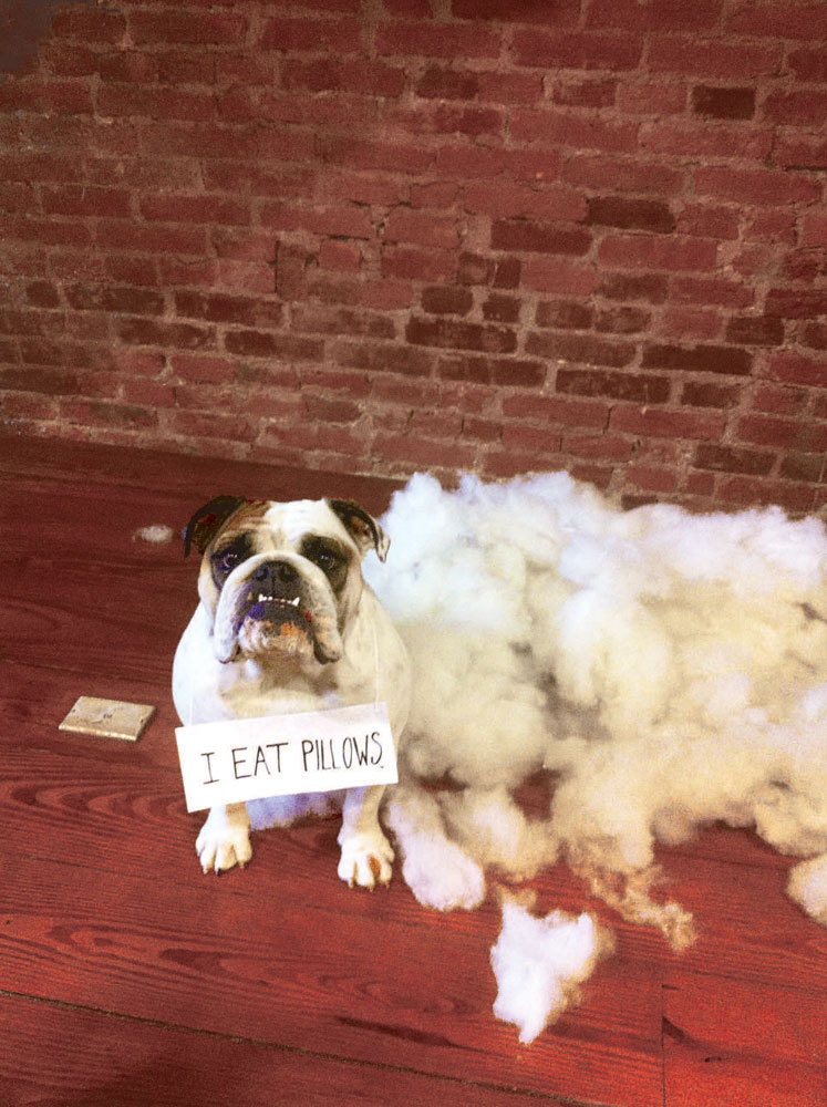 Dog Shaming 2017 Day-to-Day Calendar: Pascale Lemire