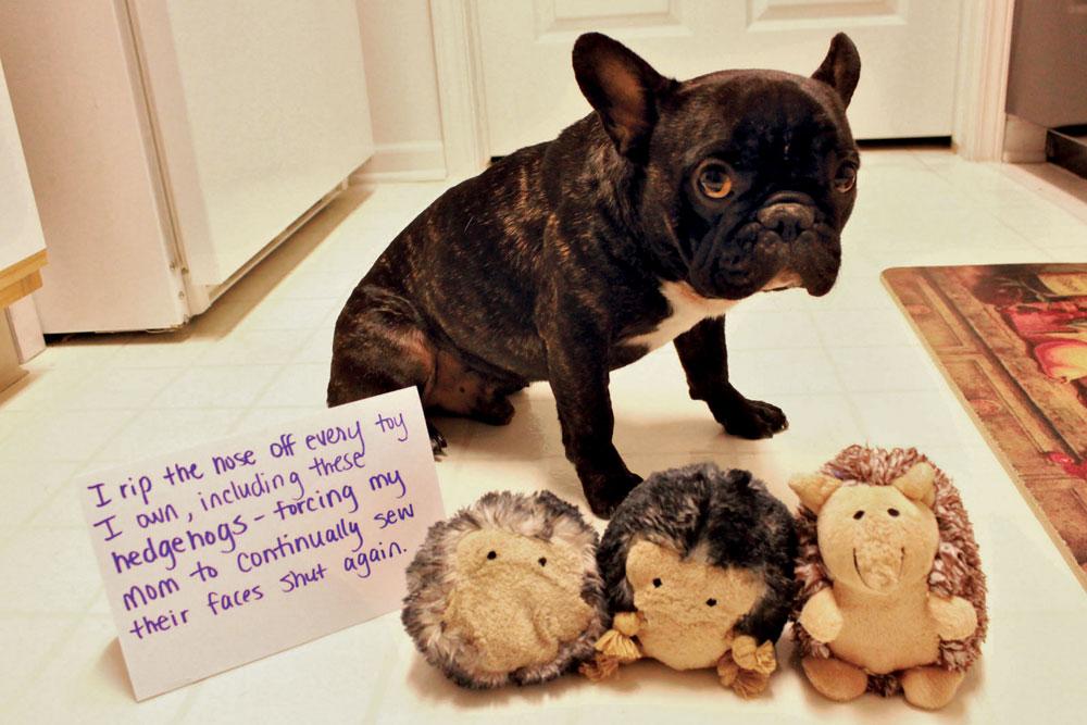 Amazon.com: Dog Shaming (9780385349345): Pascale Lemire: Books
