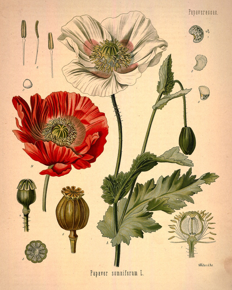 Flora Mirabilis How Plants Have Shaped World Knowledge Health