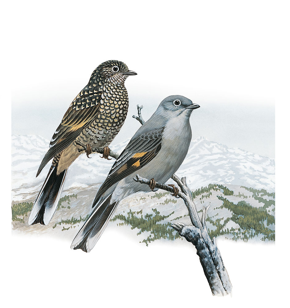 national geographic illustrated birds of north america folio
