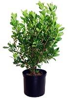 outdoor-plants-shrubs