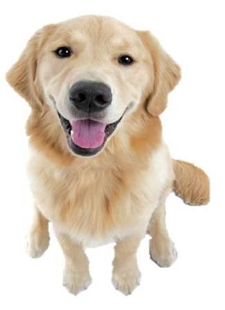 Nylabone Dog