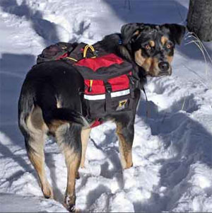 Amazon.com : Mountainsmith Dog Pack, Heritage Red, Small : Camping ...