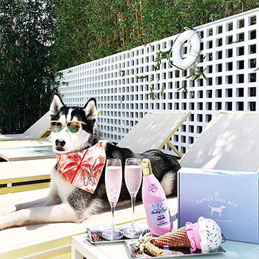 The Dapper Dog Box - Curated Fun Themed Dog Toys, Treats and Accessories Subscription