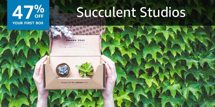 Succulent Studios