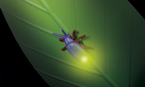 Amazon Com Fireflies In My Room Toys Amp Games