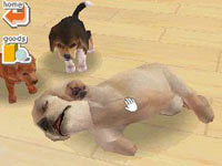 Three puppy friends playing together in Nintendogs Dachshund & Friends