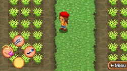 Grow food in 'Harvest Moon: Island of Happiness'
