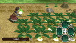 Farming in 'Rune Factory: Frontier'