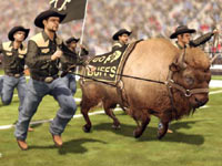 The Colorado mascot being run onto the field in NCAA Footbal 12