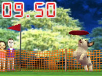A French Bulldog competing in an event in Nintendogs + Cats: Toy Poodle and New Friends