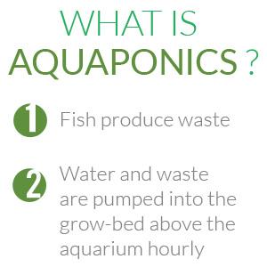 Aquasprouts4a._SR300,300_.jpg