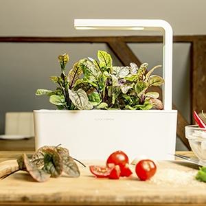 Cultivating an Indoor Garden With Gardenista  Etsy Journal