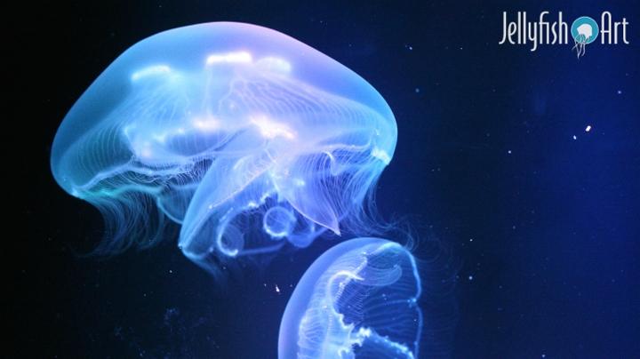 amazon com jellyfish art jelly cylinder nano pet supplies