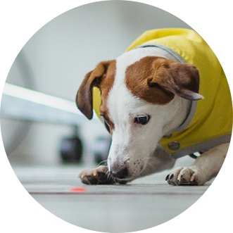 Charming For Additional Playtime, Use Autoplay Mode To Keep Your Pets From Getting  Bored. You Can Also Share Access To Your Petcube Camera With Family And  Friends.