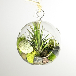 Our Hanging Air Plant Terrarium allows you to add a splash of life  anywhere. Hang your terrarium with the included hemp twin in your office or  kitchen.