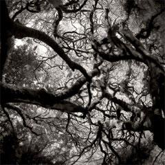 Amazon Creative Black And White Digital Photography Tips