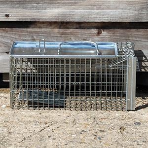 big cheese rat trap instructions