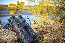 hoya;premium;bird watching;birdwatching