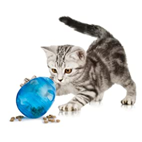 Cat Cats Play Innovative Toys Instincts Hunting Fun Excitement Exercise Pouncing Chasing Jumping