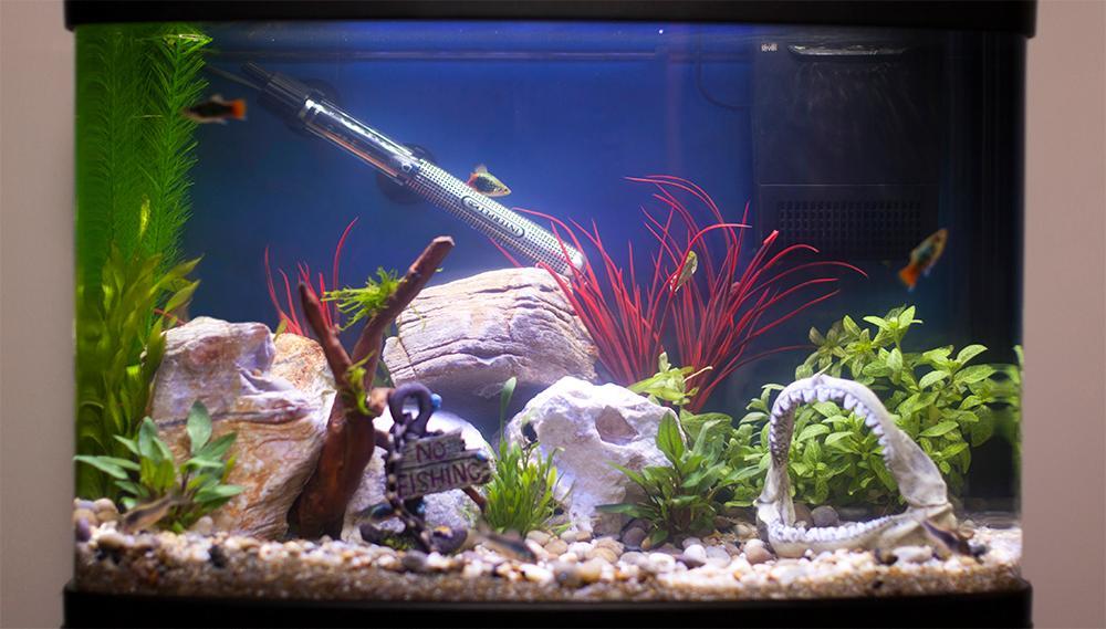 Interpet deltatherm aquarium heater 300 w for Best fish tank heater