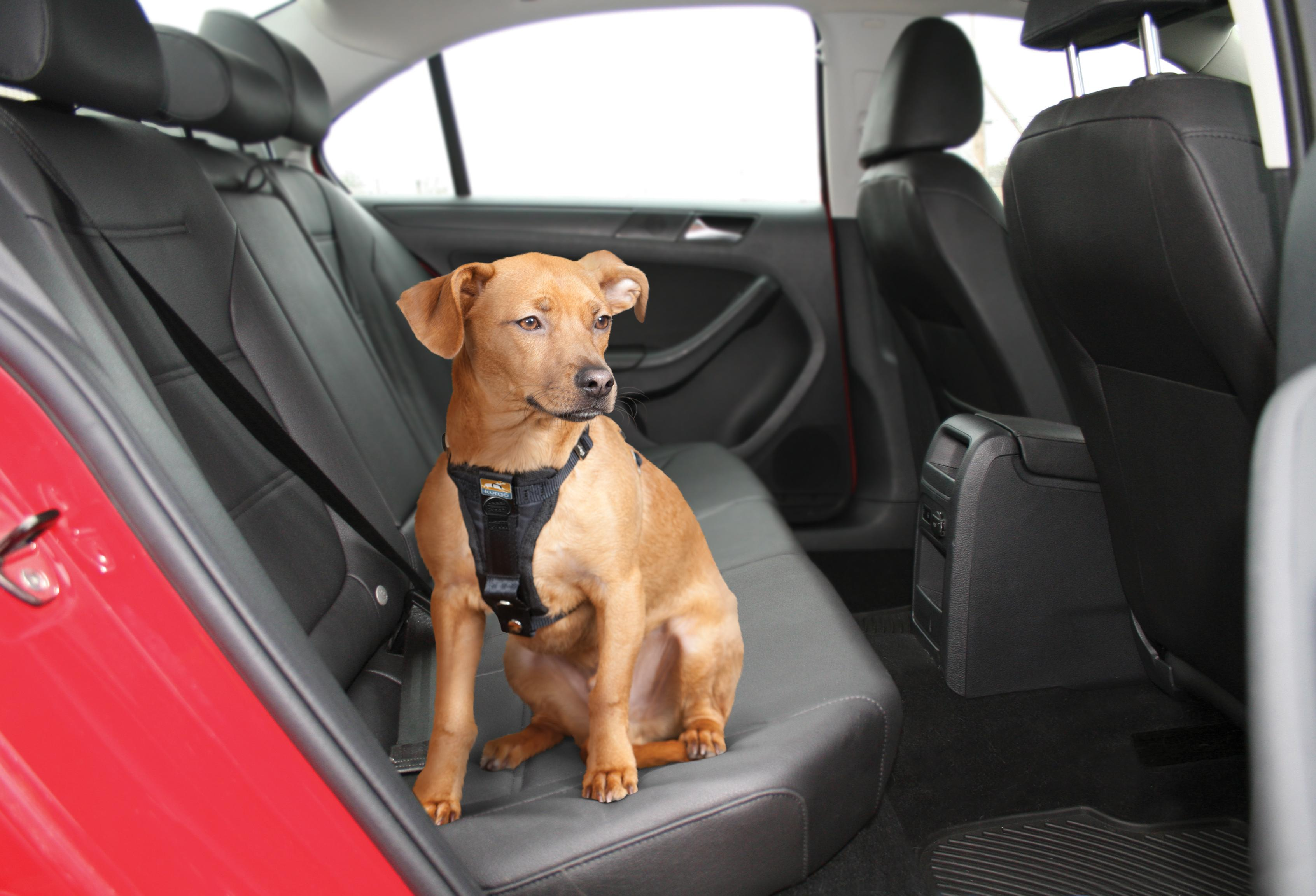 Kurgo Vehicle Safety Harness For Dogs Universal Seatbelt