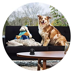 security pet camera, Cricle, Home Camera, Safety, 1080p, cloud, wireless