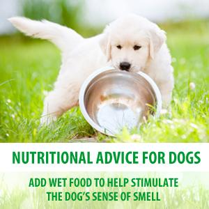 Almo Nature nutritional advice for dogs