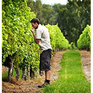 Kim Crawford Winemaker Vineyards Marlborough