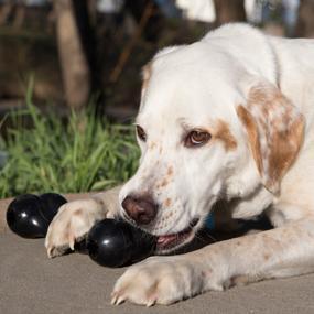 Kong Extreme Goodie Bone Dog Toy Medium Black Amazon