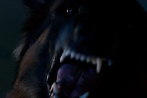DarknessAmazon0 05