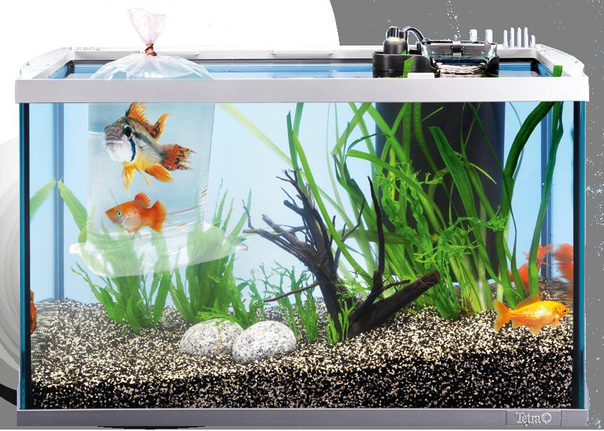tetra safestart aquarienstarter mit lebenden nitrifizierenden bakterien erlaubt den schnellen. Black Bedroom Furniture Sets. Home Design Ideas