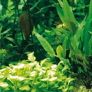 Das Tetra-Pflanzenpflege-Programm