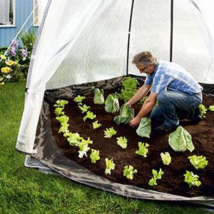 biogreen tropical island zelt winterschutz palmen pflanzen. Black Bedroom Furniture Sets. Home Design Ideas
