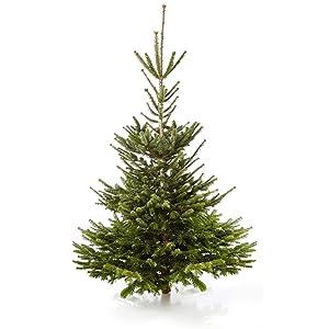 Echter weihnachtsbaum nordmanntanne h ca 145 160 cm for Amazon weihnachtsbaum