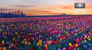 Atemberaubende Farben und Bilddetails