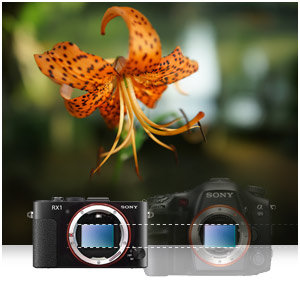 Get pro-quality pictures with a Full Frame 35mm Exmor CMOS sensor that takes high quality 24.3 megapixel photos.
