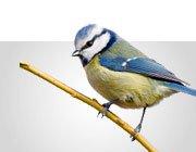 Futter für Wild- & Gartenvögel