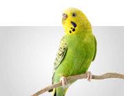 Vogelfutter