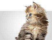 Bio-Katzenfutter