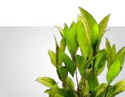 Lebende Pflanzen