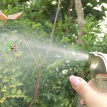 クモの巣にかけるユースシーン(CNS参照)
